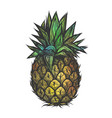 hand drawn of pineapple vector image vector image