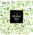 logo herbal tea watercolor seamless pattern vector image vector image