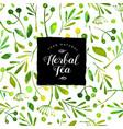 logo herbal tea watercolor seamless pattern vector image vector image