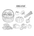 Organic Farm Vegetables Isolated Hand Drawn vector image