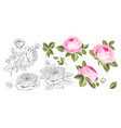 rose bud collection elements roses isolated on vector image vector image