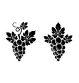 two grapes branches vector image