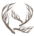 Hand drawn deer antlers isolated on white