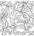 basil seamless pattern vector image vector image