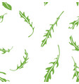 cooking herbs arugula seamless pattern vector image