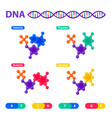 dna structure genome sequencing concept vector image vector image