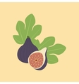 Fig Fruit Icon vector image vector image