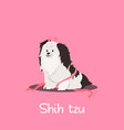 a cute shih tzu dog on pink background vector image