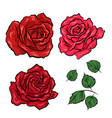 hand drawn roses and leaves isolated on white vector image