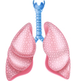 Cartoon of healthy Lungs Anatomy vector image vector image