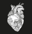 hand drawn human heart on black background vector image vector image