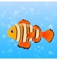 Ocellaris clownfish vector image