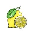 lemon on white background vector image