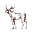 moose or elk hand drawn with contour lines on vector image