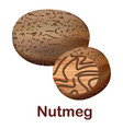 nutmeg icon realistic style vector image