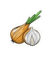 onion on white background vector image vector image