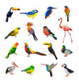 polygonal birds geometrical stylized animals set vector image