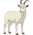 Adult funny goat vector image vector image