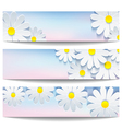 Set of banners with decorative flower chamomile vector image vector image