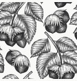 hand drawn sketch hazelnut seamless pattern vector image