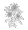 sunflower bouquet drawing sketch three flowers vector image