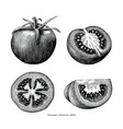 tomatoes hand draw vintage clip art isolated on vector image vector image