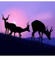 Grazing Antelopes vector image vector image