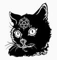 black magic cat with a pentagram vector image