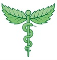 caduceus with leaves vector image vector image