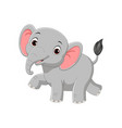 cute baelephant isolated on white background vector image vector image