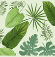 collection palm leaves natural vector image