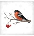 Winter Bird Bullfinch Tree Branches vector image