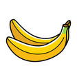 graphic of bananas vector image vector image