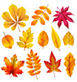 realistic autumn leaves fall orange wood foliage vector image vector image