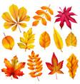 realistic autumn leaves fall orange wood foliage vector image