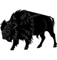 american buffalo or bull vector image