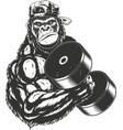 terrible gorilla athlete vector image