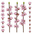 set of color images with blossoming branches vector image
