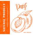 hand drawn fruit sweet peach element vector image