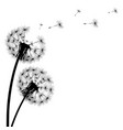 black silhouette a dandelion on a white vector image