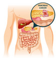 cartoon digestive human organs concept vector image