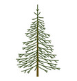 christmas tree fir object vector image vector image
