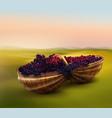 grape in basket vector image vector image