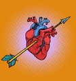 real heart with cupid arrow vector image vector image