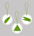 ripe vegetables round peas vector image