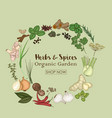 spices and herbs for shop organic garden vector image vector image