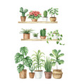 watercolor aesthetic room decor and indoor plants vector image