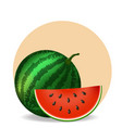 watermelon and slice on white background vector image vector image