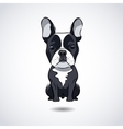 French bulldog isolated on white background vector image