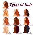 hair types chart displaying all types and labeled vector image